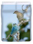 Mountain Bluebird Pair Duvet Cover