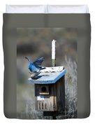 Mountain Bluebirds Mating Duvet Cover