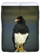 Mountain Caracara Duvet Cover
