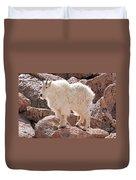 Mountain Goat On Mount Evans Duvet Cover