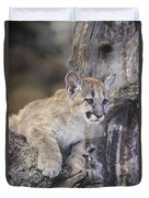 Mountain Lion Cub On Tree Branch Duvet Cover