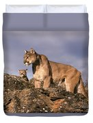 Mountain Lions Felis Concolor Duvet Cover