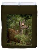 Mule Deer On Alert Duvet Cover