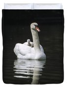 Mute Swan With Chicks On Back Duvet Cover