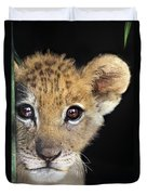 My Grandma What Big Eyes You Have African Lion Cub Wildlife Rescue Duvet Cover