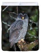 Mysterious Owl Duvet Cover