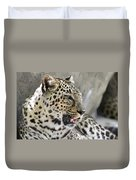 Naples Zoo - Leopard Relaxing 1 Duvet Cover