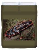 Net-winged Beetle  Borneo Duvet Cover
