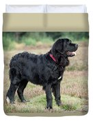 Newfoundland Dog, Standing In Field Duvet Cover