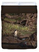 Night Heron At Corroboree Billabong Duvet Cover