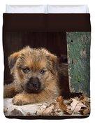 Norfolk Terrier Puppy By Barn Door Duvet Cover