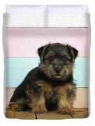 Norfolk Terrier Puppy Dog, Sitting Duvet Cover