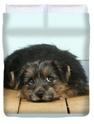 Norfolk Terrier Puppy Duvet Cover