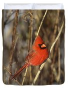 Northern Cardinal Male Long Island Duvet Cover