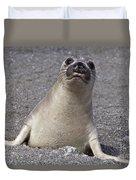 Northern Elephant Seal Weaner Duvet Cover