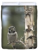 Northern Hawk Owl In The Spring Alaska Duvet Cover
