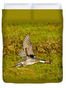 Northern Pintail In Flight Duvet Cover