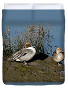 Northern Pintail Pair At Rest Duvet Cover