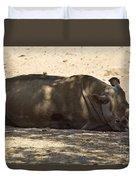 Northern White Rhinoceros - Ceratotherium Simum Cottoni Duvet Cover