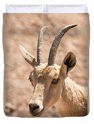 Nubian Ibex Capra Ibex Nubiana 1 Duvet Cover