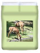 Nyalas At The Watering Hole Duvet Cover