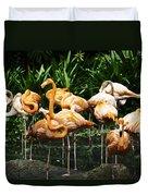 Oil Painting - Number Of Flamingos Inside The Jurong Bird Park Duvet Cover