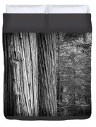 Old Growth Cedars Glacier National Park Bw Duvet Cover