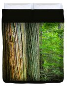 Old Growth Cedars Glacier National Park Painted Duvet Cover by Rich Franco