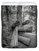 Old Growth Forest Black And White Collection 4 Duvet Cover