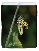 Oldworld Swallowtail Butterfly Duvet Cover