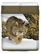 On The Prowl Duvet Cover by Jack Milchanowski
