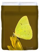 Orange Barred Sulfur Butterfly Duvet Cover