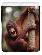 Orangutan Hanging On Tree Duvet Cover