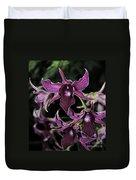 Orchid Dendrobium Lavender Star 204 Duvet Cover