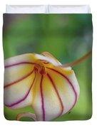 Orchids - Masdevallia Hybrid Duvet Cover