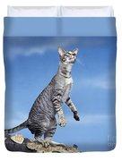 Oriental Cat Duvet Cover