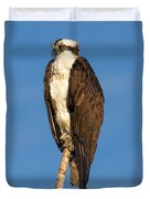 Osprey Perched In Yellowstone National Park Duvet Cover