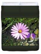 Osteospermum - African Daisy - Pink Duvet Cover