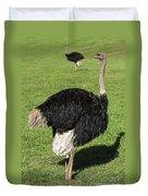 Ostrich 1 Duvet Cover