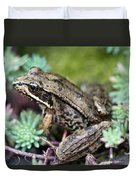 Pacific Tree Frog Among Succulent Plant Duvet Cover by David Gn