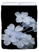 Pale Blue Plumbago Isolated On Black Background  Duvet Cover