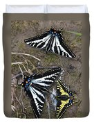 Pale Swallowtails And Western Tiger Swallowtail Butterflies Duvet Cover