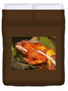 panther chameleon from Madagascar 3 Duvet Cover