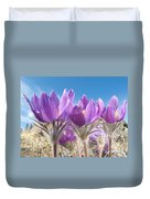Pasque Flowers Close-up In Natural Environment Duvet Cover