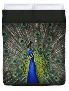 Peacock In Open Feathers, Victoria, Bc Duvet Cover
