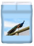 Peacock On Fence 1 Duvet Cover