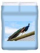 Peacock Strut Duvet Cover