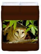 Peering Barn Owl Duvet Cover