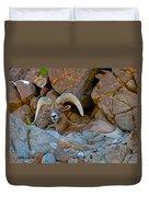 Peninsular Desert Bighorn Duvet Cover
