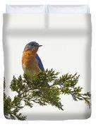 Perched Eastern Bluebird Duvet Cover